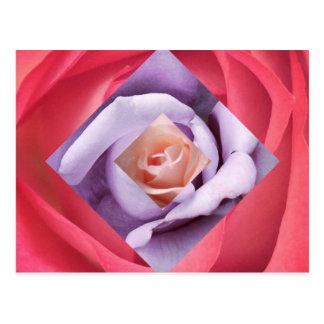 Rose Diamond Postcard