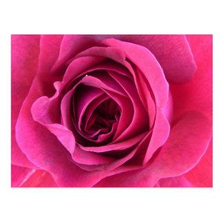 Rose dream in pink postcard