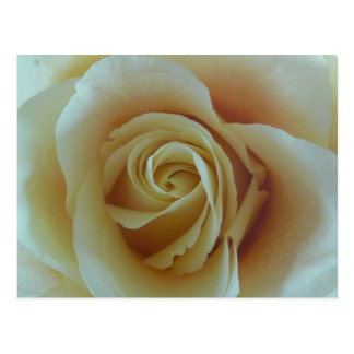 Rose dream postcard