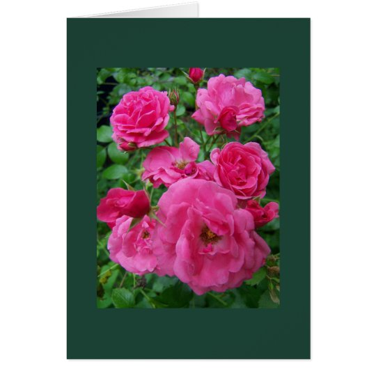 Rose Family Card