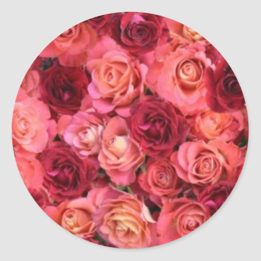ROSE FIELD ,bright vibrant  red  pink Stickers
