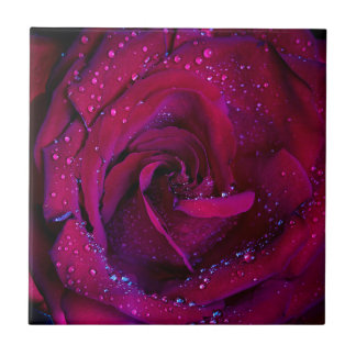 rose flowers flower red water droplets date dance small square tile