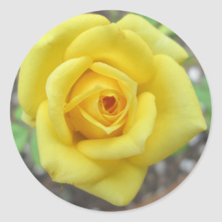 Rose Garden Flower Mini Yellow Round Stickers