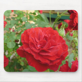Rose garden mouse pad 4