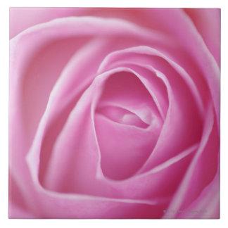 Rose, Germany Tile
