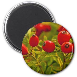 Rose Hip 6 Cm Round Magnet