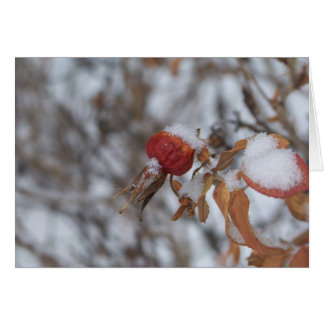Rose Hip in Winter Card