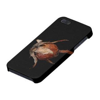 Rose Hip iPhone 5 Cases