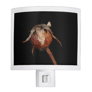 Rose Hip Night Light