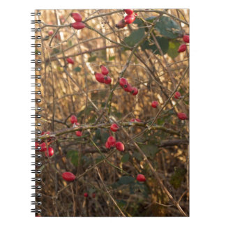Rose Hip Notebook