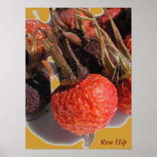 Rose Hip Print