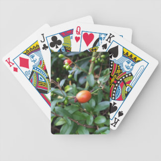 Rose hip ripen bicycle playing cards