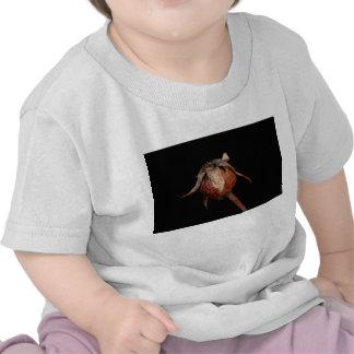 Rose Hip T Shirts