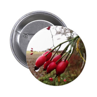 Rose Hips And Rain Buttons