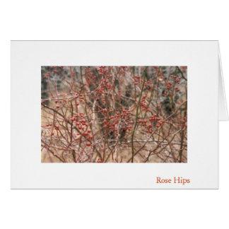Rose Hips Greeting Card
