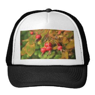 Rose Hips Mesh Hat