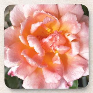 rose in autumn coaster