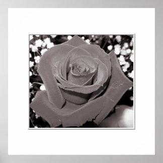 Rose in black, white & gray poster