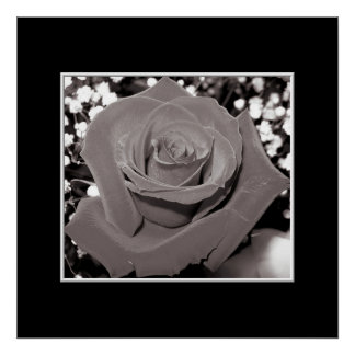 Rose in black, white & gray posters