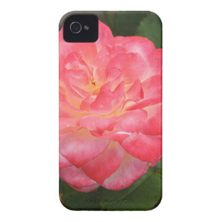 Rose in bloom iPhone 4 case