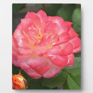 Rose in bloom plaque