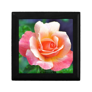 Rose in Full Bloom Gift Box