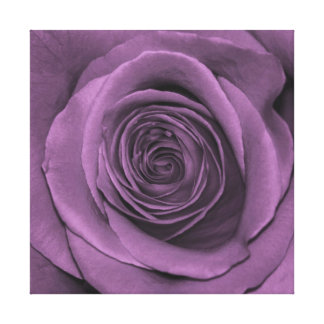 Rose in Lavender Canvas Print