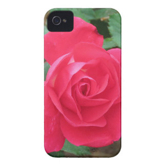 rose iPhone 4 case
