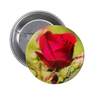 Rose Knapp Med Nål