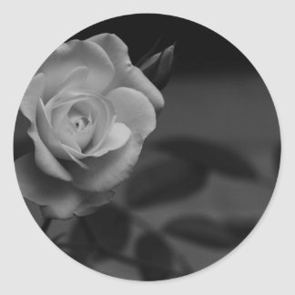 Rose monochrome photographed by Tutti Round Stickers