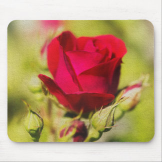 Rose Musmatta