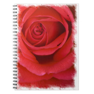 Rose Notebook 6