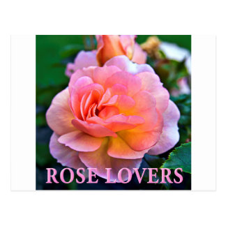ROSE OF LOVER POSTCARD