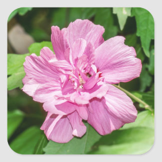 Rose of Sharon Bloom Sticker