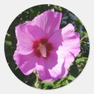 Rose of Sharon Classic Round Sticker
