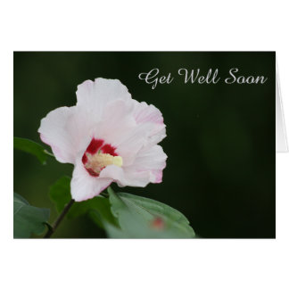 Rose of Sharon Floral Bloom Get Well Soon Greeting Card