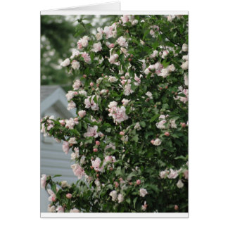 Rose of Sharon & Petunias/Get Well Greeting Card
