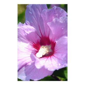 Rose of Sharon Stationery
