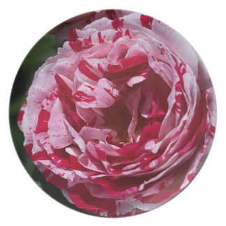 Rose of Two Pinks Melamine Plate