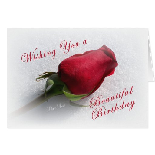 Rose on the Snow - personalize  the message Greeting Cards