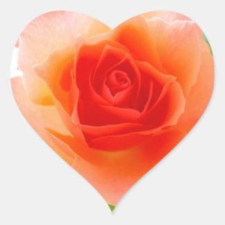 Rose Pink Sticker