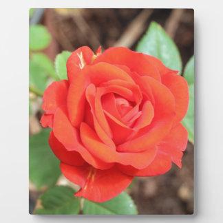rose plaque
