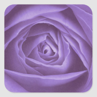 Rose purple photographed by Tutti Square Stickers