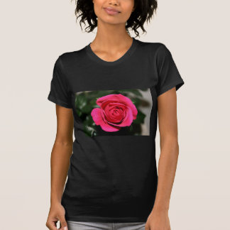 Rose Red T Shirts