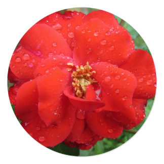 Rose Red Water Bloom 13 Cm X 13 Cm Square Invitation Card