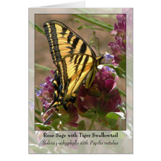 Rose Sage with Tiger Swallowtail - Native Notecard