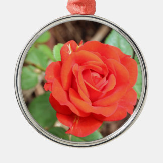 rose Silver-Colored round decoration