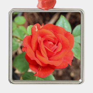 rose Silver-Colored square decoration