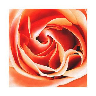 Rose sunshine color canvas print