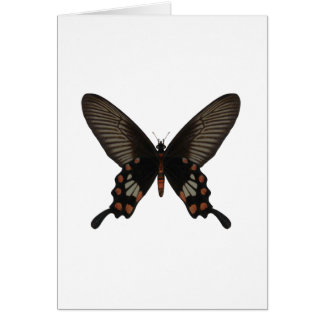 Rose Swallow Tail Butterfly Cards